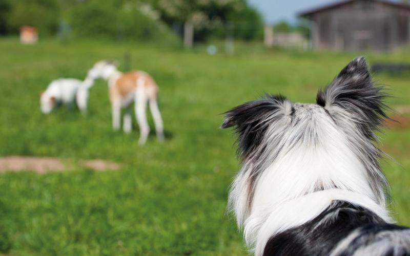 Perspektiere-Hundeerziehungsberatung-gruppenangebote