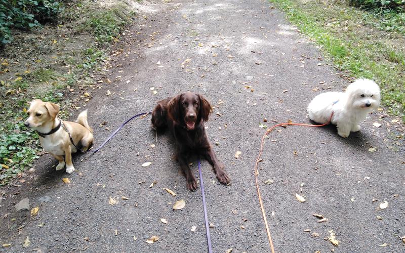 Perspektiere-Hundeerziehungsberatung-social-walk