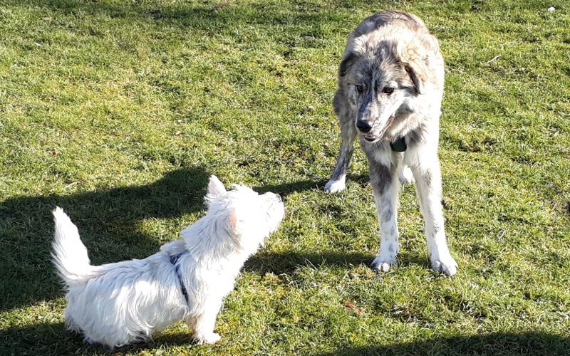 Perspektiere-Hundeerziehungsberatung-verhaltensberatung